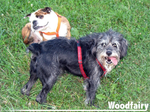 Woodfairy Tiervermittlung mit Teamtraining